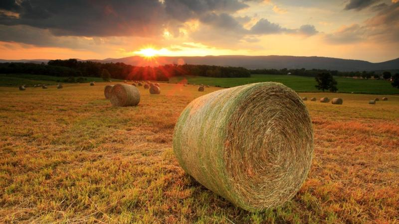 making straw/hay bales work for you everyday
